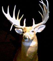 deerhunting.jpg